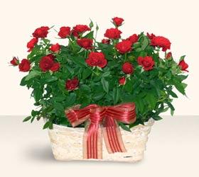 Bursa hediye sevgilime hediye çiçek  11 adet kirmizi gül sepette