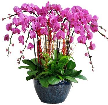 9 dallı mor orkide  Bursa çiçek siparişi sitesi