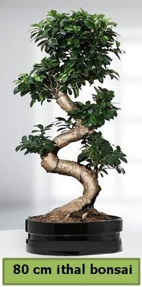 80 cm özel saksıda bonsai bitkisi  Bursa kaliteli taze ve ucuz çiçekler