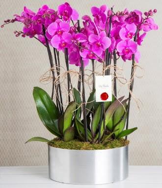 11 dallı mor orkide metal vazoda  Bursa çiçek online çiçek siparişi