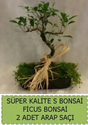Ficus S Bonsai ve arap saçı  Bursa kaliteli taze ve ucuz çiçekler
