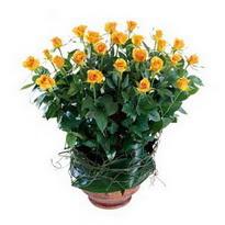 Bursa hediye çiçek yolla  10 adet sari gül tanzim cam yada mika vazoda çiçek