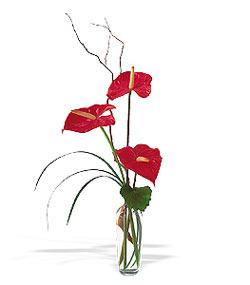 Bursa çiçek gönderme sitemiz güvenlidir  cam yada mika Vazoda 3 adet  antoryum