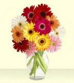 Bursa anneler günü çiçek yolla  cam yada mika vazoda 15 özel gerbera