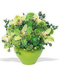 cam yada mika vazoda 5 adet orkide   Bursa 14 şubat sevgililer günü çiçek