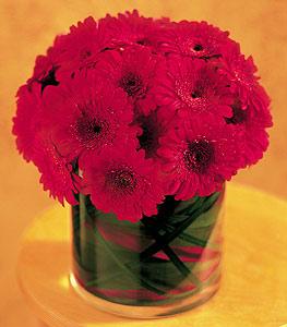 Bursa online çiçekçi , çiçek siparişi  23 adet gerbera çiçegi sade ve sik cam içerisinde