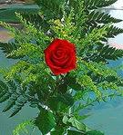 1 adet kirmizi gül buketi   Bursa çiçek satışı