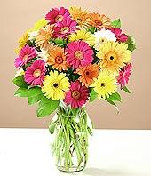 Bursa internetten çiçek siparişi  17 adet karisik gerbera
