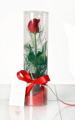 Bursa çiçek servisi , çiçekçi adresleri  Silindir vazoda tek kirmizi gül