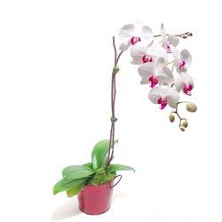 Bursa çiçek mağazası , çiçekçi adresleri  Saksida orkide