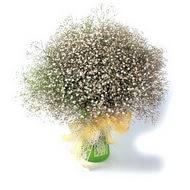 Bursa online çiçek gönderme sipariş  cam yada mika vazo içerisinde cipsofilya demeti
