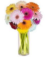 Bursa çiçekçi telefonları  Farkli renklerde 15 adet gerbera çiçegi