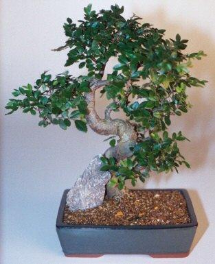 Bursa çiçek online çiçek siparişi  ithal bonsai saksi çiçegi  Bursa çiçek gönderme sitemiz güvenlidir