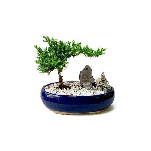 ithal bonsai saksi çiçegi  Bursa çiçek mağazası , çiçekçi adresleri