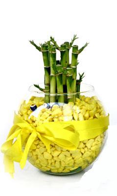 cam fanus içerisinde bambo  Bursa çiçek yolla