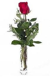 Vazo içerisinde 1 adet kirmizi gül  Bursa hediye çiçek yolla