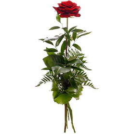 Bursa 14 şubat sevgililer günü çiçek  1 adet kırmızı gülden buket