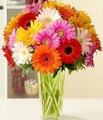 Bursa çiçek siparişi vermek  15 adet gerbera çiçek vazosu