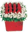 Bursa çiçek mağazası , çiçekçi adresleri  Kare cam yada mika içinde kirmizi güller - anneler günü seçimi özel çiçek