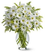 Vazo içerisinde beyaz krizantem çiçekleri  Bursa İnternetten çiçek siparişi