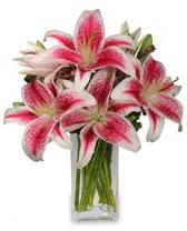 Vazo içerisinde 5 dal kazablanka çiçeği  Bursa hediye çiçek yolla