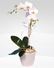 1 dallı orkide saksı çiçeği  Bursa 14 şubat sevgililer günü çiçek