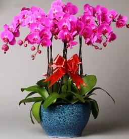 7 dallı mor orkide  Bursa internetten çiçek siparişi
