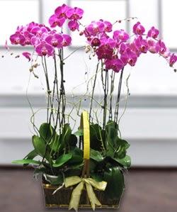 4 dallı mor orkide  Bursa cicekciler , cicek siparisi