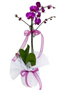 Tek dallı mor orkide  Bursa kaliteli taze ve ucuz çiçekler