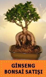 Ginseng bonsai satışı japon ağacı  Bursa ucuz çiçek gönder