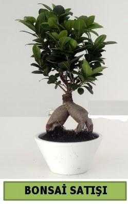 Bonsai japon ağacı satışı  Bursa çiçek siparişi vermek