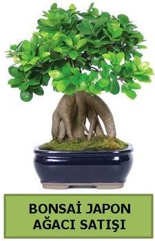 Bonsai japon ağacı satışı  Bursa güvenli kaliteli hızlı çiçek