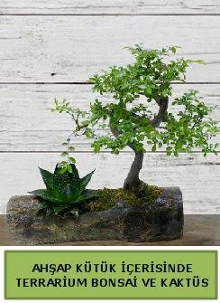Ahşap kütük bonsai kaktüs teraryum  Bursa çiçekçi telefonları