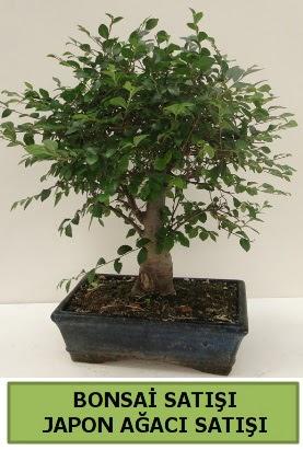 Minyatür bonsai japon ağacı satışı  Bursa çiçek online çiçek siparişi