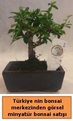 Japon ağacı bonsai satışı ithal görsel  Bursa çiçek servisi , çiçekçi adresleri