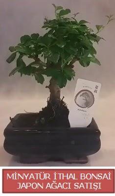 Küçük görsel bonsai japon ağacı bitkisi  Bursa yurtiçi ve yurtdışı çiçek siparişi