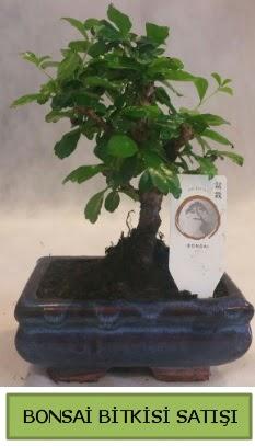 Bonsai ithal görsel minyatür japon ağacı  Bursa online çiçekçi , çiçek siparişi