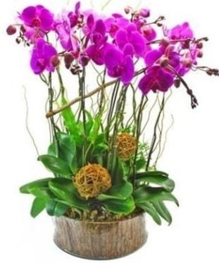 Ahşap kütükte lila mor orkide 8 li  Bursa çiçek yolla