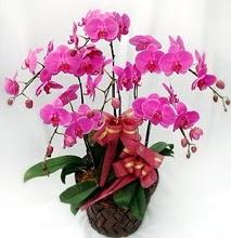 Sepet içerisinde 5 dallı lila orkide  Bursa online çiçekçi , çiçek siparişi