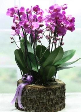 Kütük içerisinde 6 dallı mor orkide  Bursa online çiçekçi , çiçek siparişi