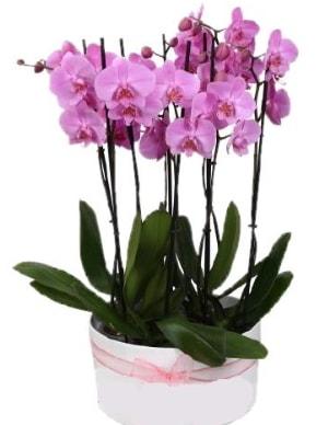 Beyaz seramik içerisinde 7 dallı mor orkide  Bursa kaliteli taze ve ucuz çiçekler