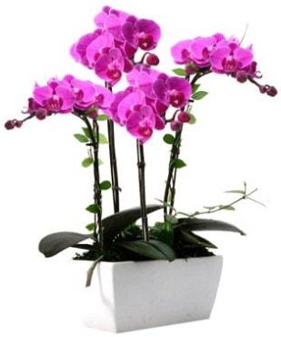 Seramik vazo içerisinde 4 dallı mor orkide  Bursa güvenli kaliteli hızlı çiçek