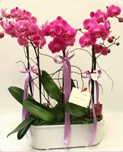Beyaz seramik içerisinde 4 dallı orkide  Bursa online çiçekçi , çiçek siparişi
