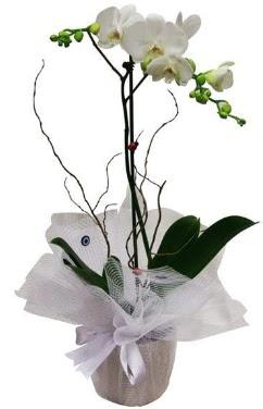 Tek dallı beyaz orkide  Bursa ucuz çiçek gönder