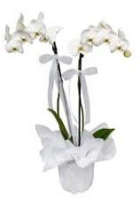 2 dallı beyaz orkide  Bursa cicekciler , cicek siparisi