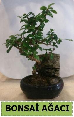 Bonsai ağacı japon ağacı satışı  Bursa çiçek yolla , çiçek gönder , çiçekçi