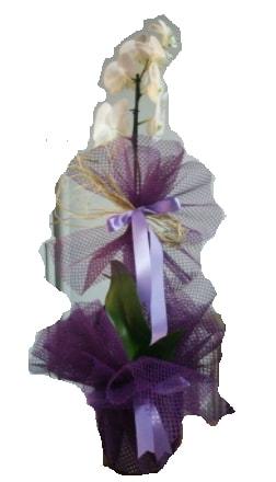 Tek dallı beyaz orkide süper kalite ithal  Bursa çiçek gönderme sitemiz güvenlidir