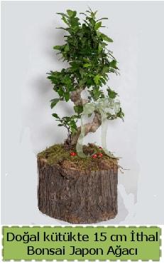 Doğal kütükte İthal bonsai japon ağacı  Bursa çiçek mağazası , çiçekçi adresleri