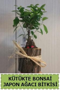 Kütük içerisinde doğal bonsai ağacı  Bursa kaliteli taze ve ucuz çiçekler