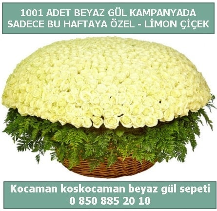 1001 adet beyaz gül sepeti özel kampanyada  Bursa çiçek online çiçek siparişi